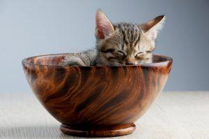 5 razões para criar um gatinho